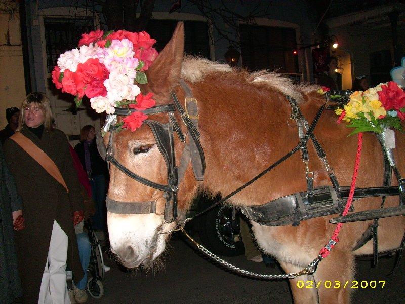 Krewe du Vieux Mule