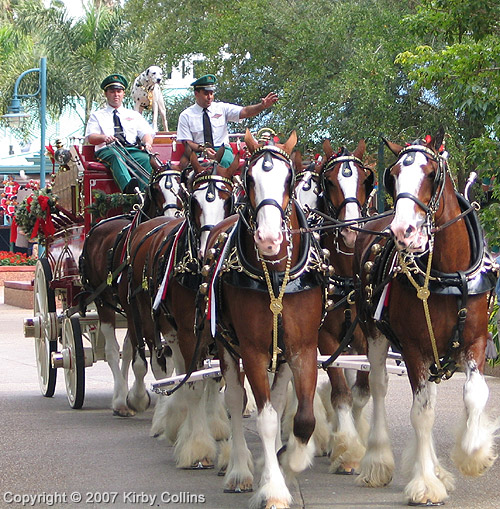 0867 hallamore clydesdales